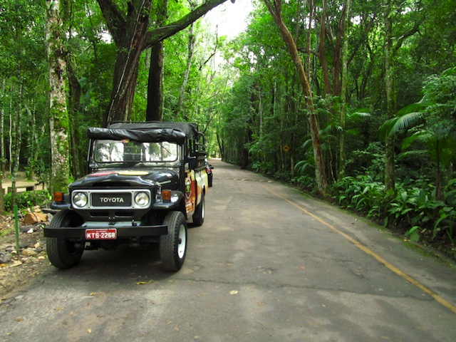 Tijuca Forest Jeep Tour