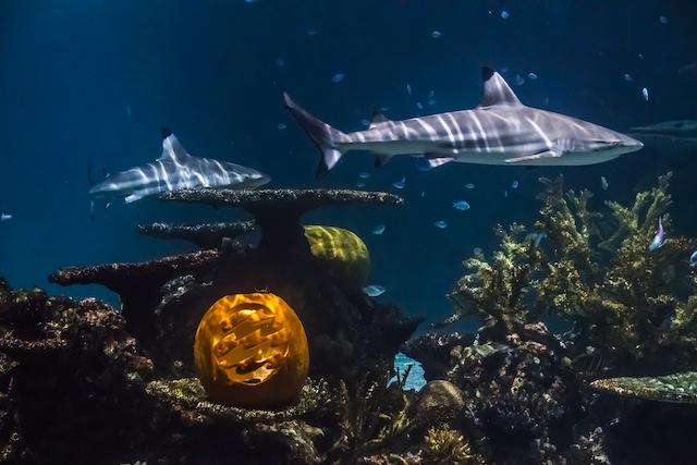 shark.med
