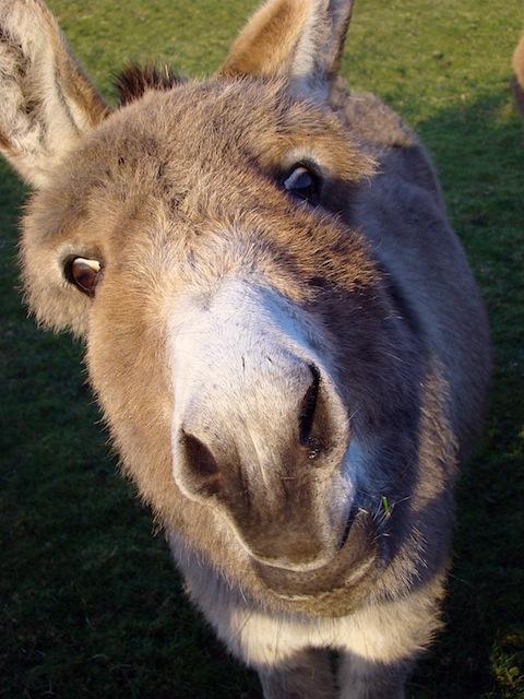 Donkey Balls Big Island Hawaii