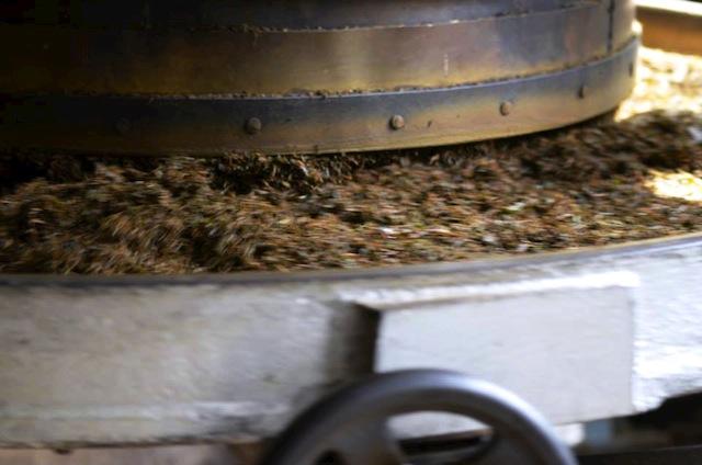 ground tea