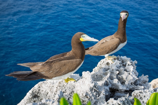 cayman brac birds