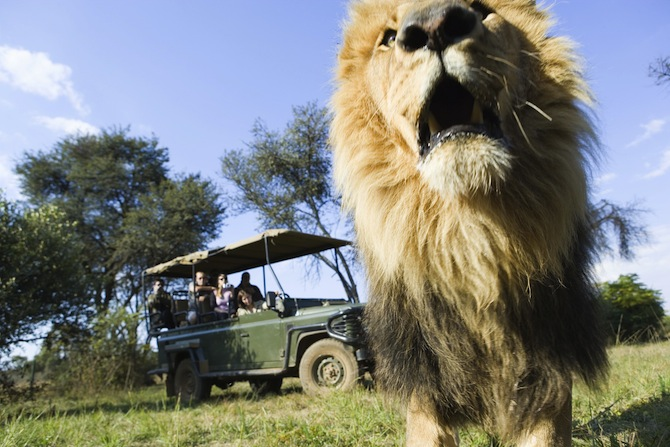 Essential South African Experiences For The Adventurous Traveler
