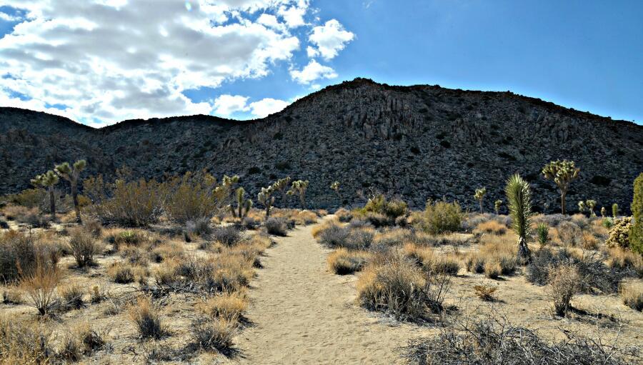 essay on trip to desert