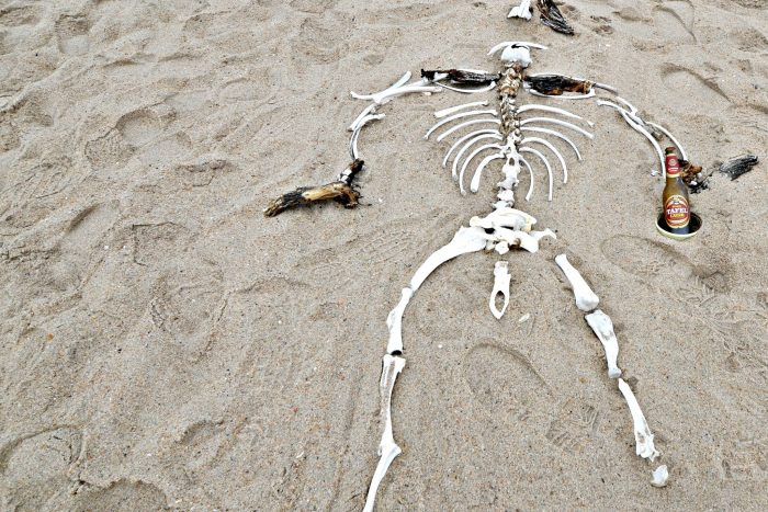 A Scarily Beautiful Journey Along Namibia's Skeleton Coast