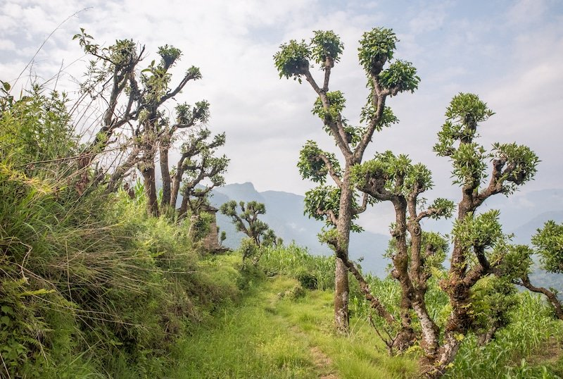 dr.seuss landscape in nepal