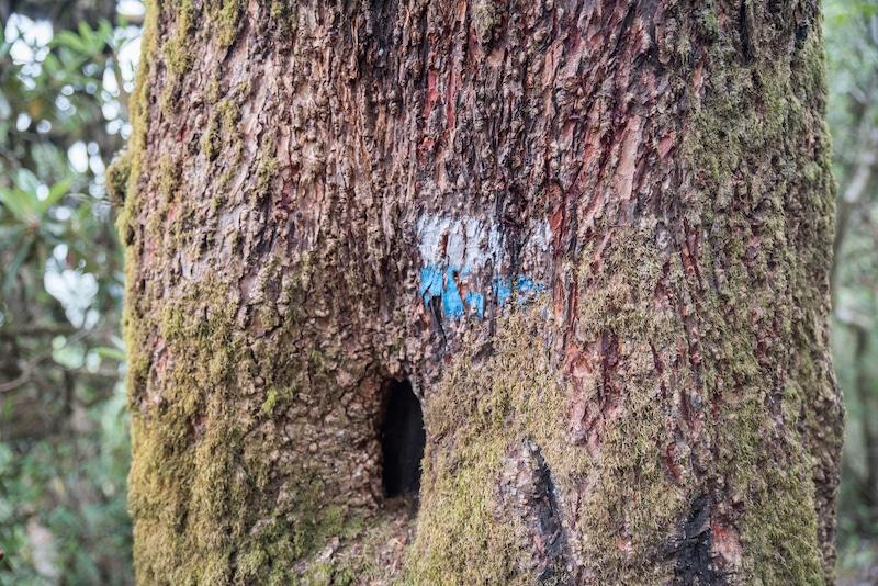 mohare Danda trail marker